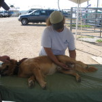K-9 Massage & Bodywork